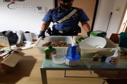 Caserta. Produzione a domicilio di marijuana. Trovate attrezzature per la coltivazione, arrestato un 41enne